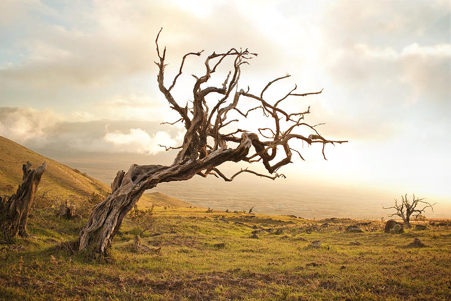 The Lesson of the Fig Tree | | Brooklyn Park Community Church